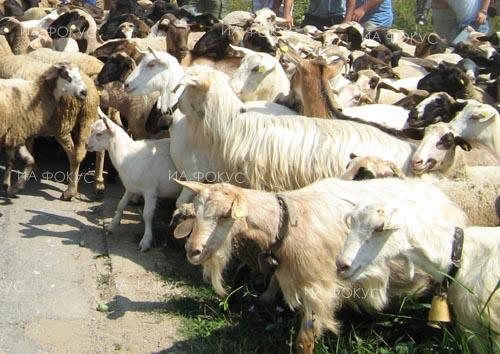 Yambol: Farmers block road to four Yambol villages with ovine rinderpest outbreak