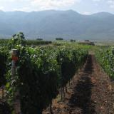 16 new wineries to open in Bulgaria by yearend: expert