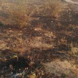 About 6,000 decares of dry grass, shrubs burned in the fire near Bulgaria's Lesovo village