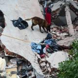 AFP: Death toll in powerful Mexico quake surges to 224