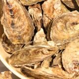 Canada: Oyster-shucking record at Tyne Valley festival