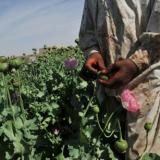 BBC: Afghanistan opium production up 43% - UN drugs watchdog