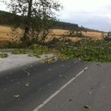 Signals for fallen trees were filed at the Regional Road Administration in Burgas