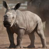 UN adopts resolution to fight wildlife poaching