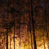 Ekathimerini: Firefighters tackle forest blaze on Corfu