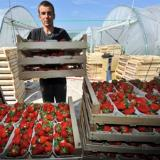 European labour market opens for Romanians, Bulgarians