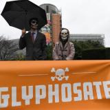 Picture: AFPWill glyphosate be Germany's grand coalition killer?