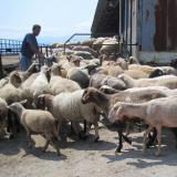 Bluetongue disease could seriously affect stock-breeding sector in Bulgaria: vet