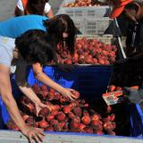 Athens asks Russia to lift import ban on strawberries, oranges and peaches