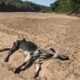 Picture: AFPPolitico.eu: Northern Europe's farmers struggle to weather extreme drought