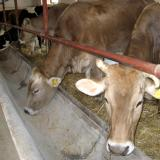 Bulgaria veterinary authorities continue work to tackle brucellosis outbreak (ROUNDUP)