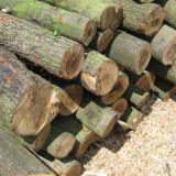 20 cubic meters of coniferous wood stolen in Bulgaria's Koprivshtitsa