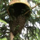 Winchester woman finds 3ft wasp nest on bed