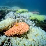 Voice of America: Australia to Spend Billions to Save Great Barrier Reef