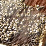 Bulgaria's Nesebar hosts national conference on apiculture sector (ROUNDUP)