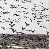Picture: Даниел Митев от БДЗПDr. Peter Yankov, ecologist: The migration of birds has already begun and is in full swing