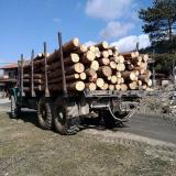 Mobile team with Bulgaria's Southwest State Company detains 2 trucks transporting illegal wood