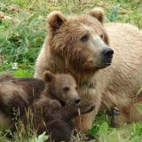 Dimitar Ivanov: September deadline for building road to Dancing Bears Park in Belitsa