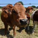 Swiss army 'steals' French water to help cows