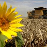 Blackseagrain.net: Bulgaria started wheat and barley harvesting