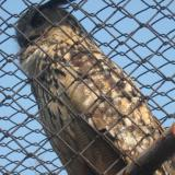 Owl kills canary during high-rise apartment raid in Idaho