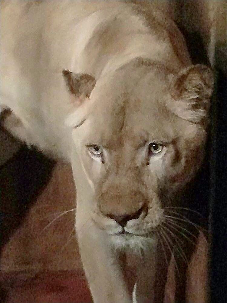 The Skopje Zoo has acquired a white lioness. January 12, 2020