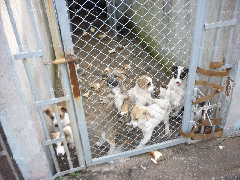Veselin Asenov: 693 dogs from the Ecoravnovesie shelters were adopted in 2017