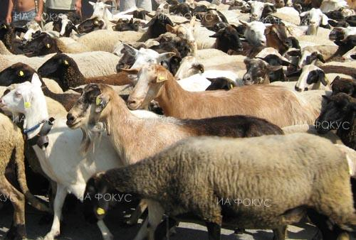 Regional Food Safety Directorate: Movement of cattle, small ruminants and equidae from and to farms in Vukovo village banned