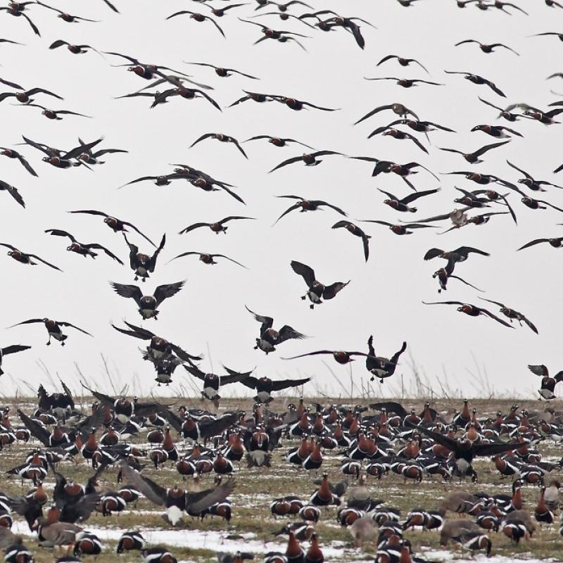 Dr. Peter Yankov, ecologist: The migration of birds has already begun and is in full swing