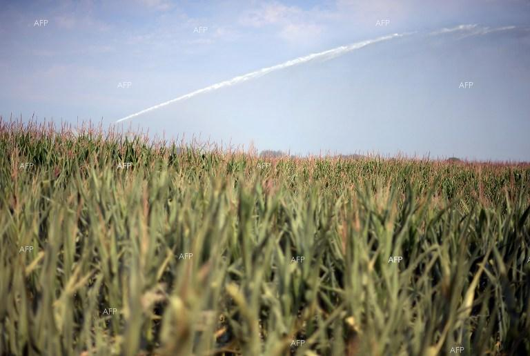 AFP: California defies White House to ban controversial pesticide