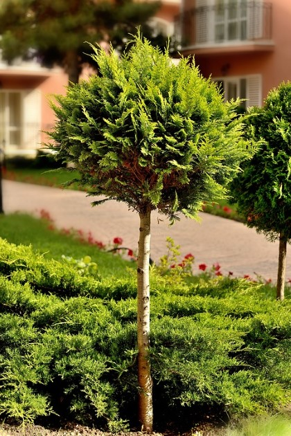 Veliko Tarnovo: Planting trees in the city will be done in conjunction with a campaign to fight lung cancer.